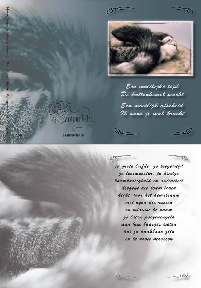 Poezen rouwkaart voor Anima Felis